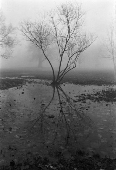 Fog tree 4