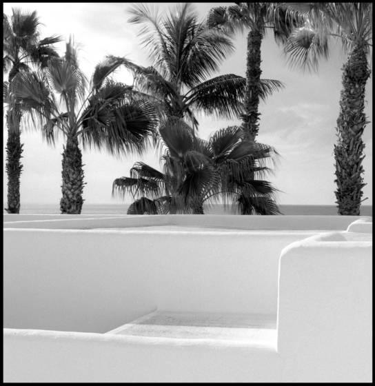 Lanzarote palme 451