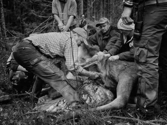 Elk hunting 4