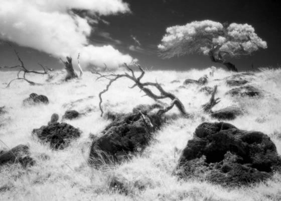 Mauna kea hillside