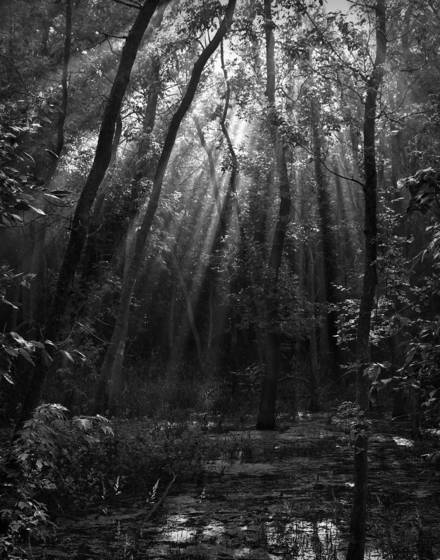 Forest light 2