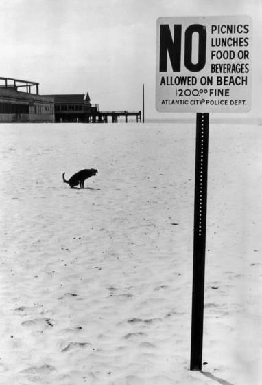 Dog obeying law