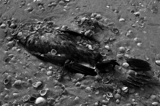Island burial
