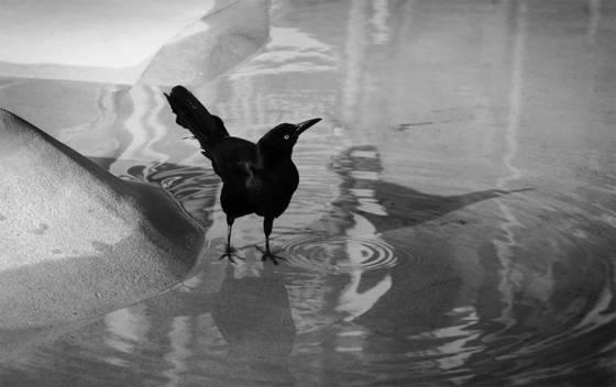 Blackbird vanity