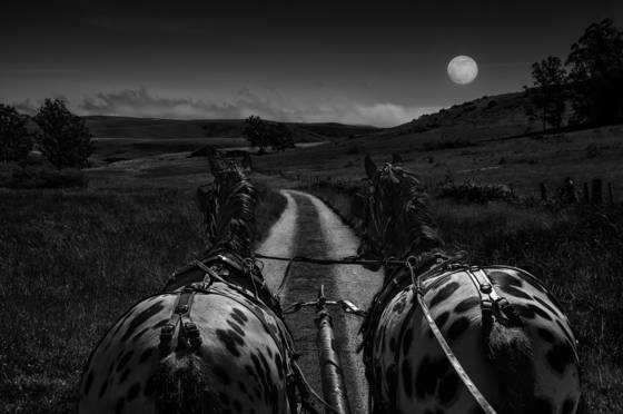 Moonlight ride
