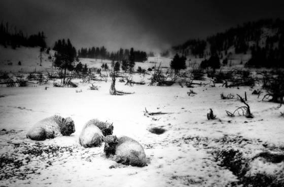 Brutal winter
