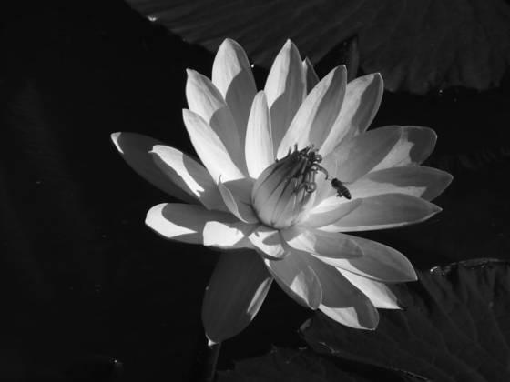 Busy bee aquatic gardens