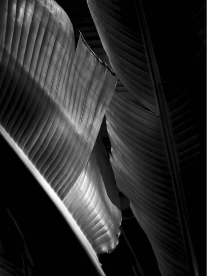 Palm leaf patterns
