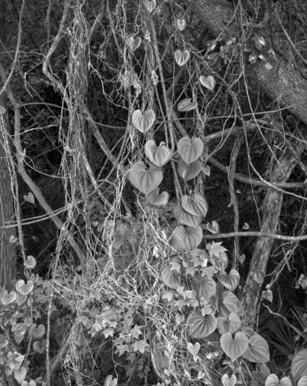 Natural trellis