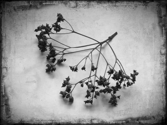 In the winter garden 1