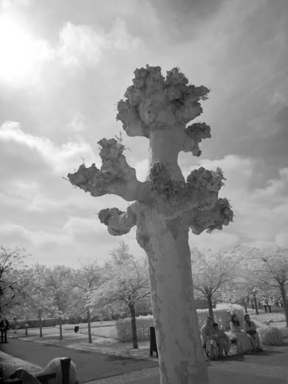 Kukenhof gardens tree