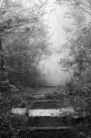 Foggy mountain stroll