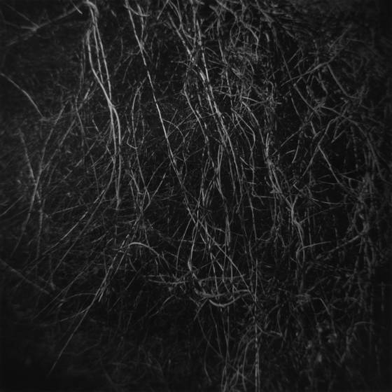 Thicket  1