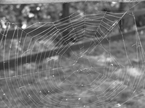 Untangled web