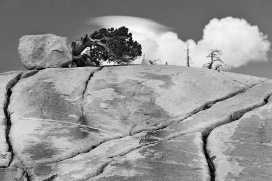 Glacial erratic  twisted juniper