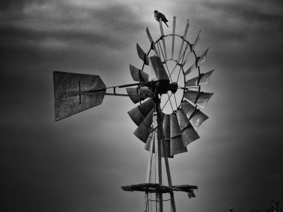 Dove and windmill