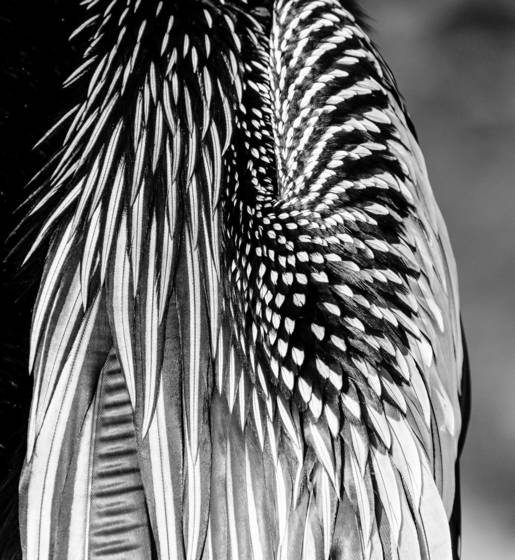 Feathers at rest
