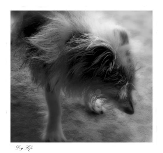 Dog life  1