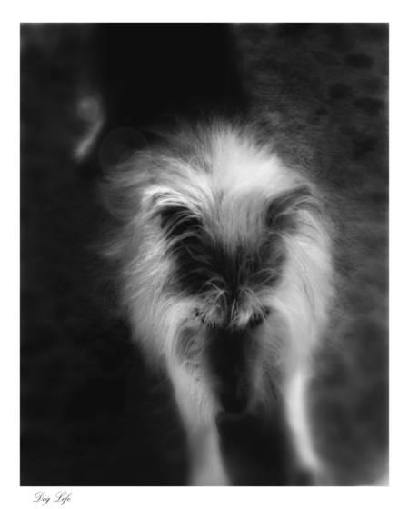 Dog life  3