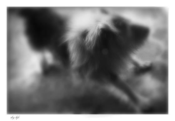 Dog life  8
