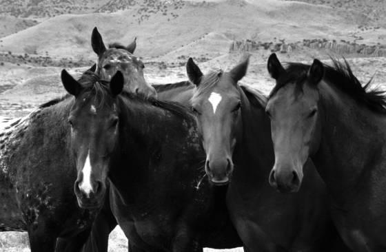 Horse series 5