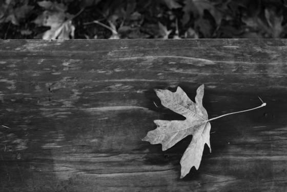 Bench leaf