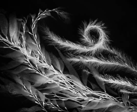 Seaweed 7