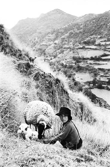 Girl with sheep in the andes
