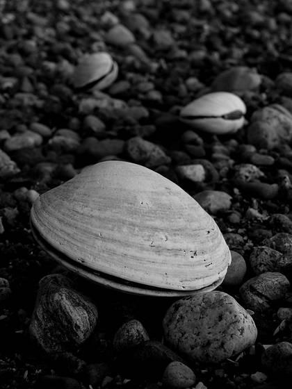 Clamorous  north beach