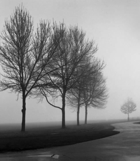 December morning walk  1