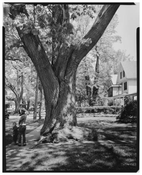Fox s oak