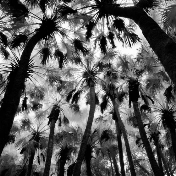 Palm hammock