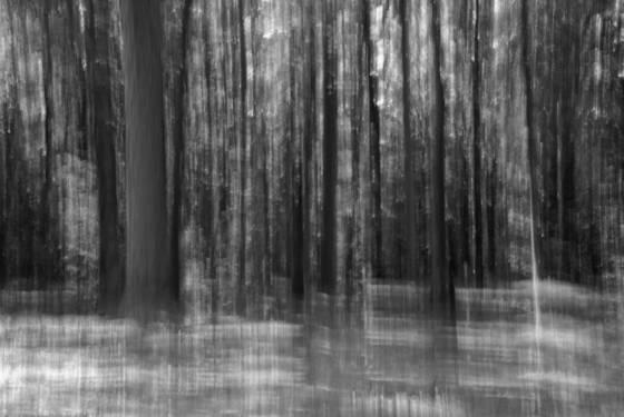 Summer blur  6954