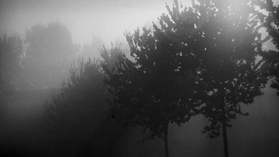 Trees in the mist 01