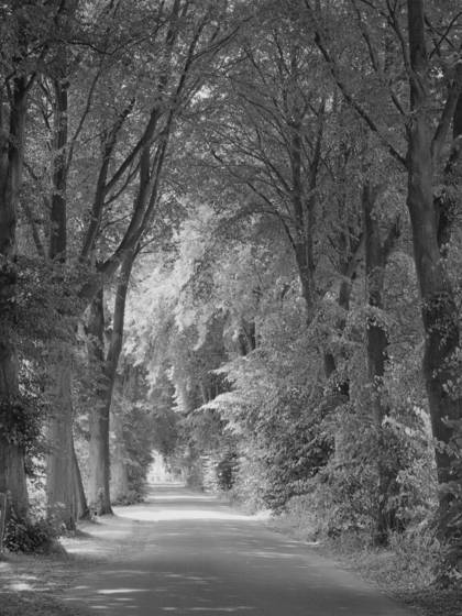 Avenue near kogel