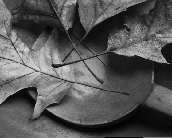 Leaves and wooden bowl