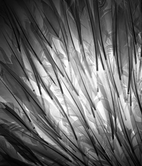 Feathers in mass