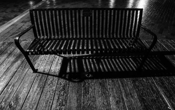 Cat under bench