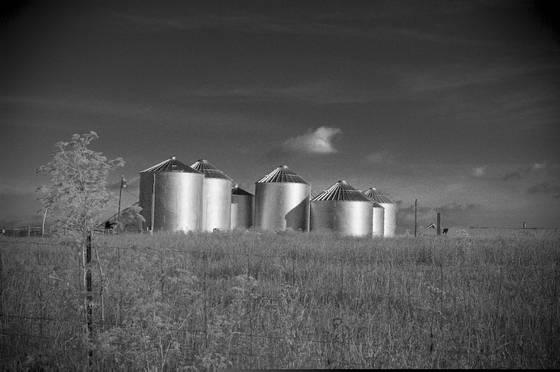 Rural landscape  10
