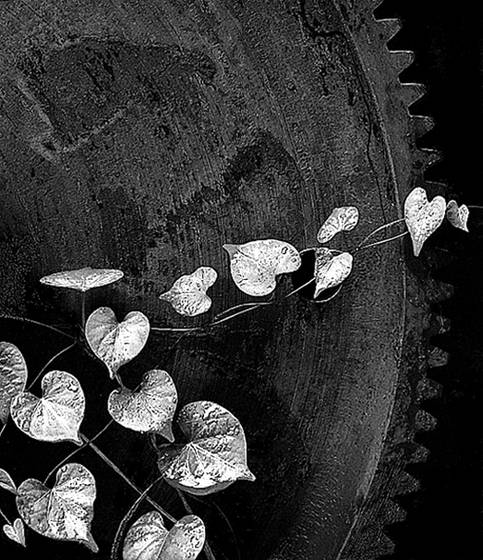 Vine on steel