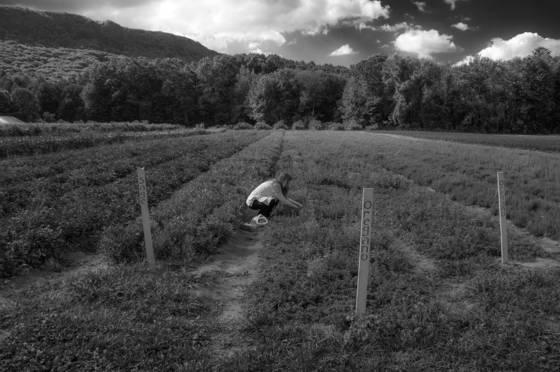 Day at mountain view farm 3