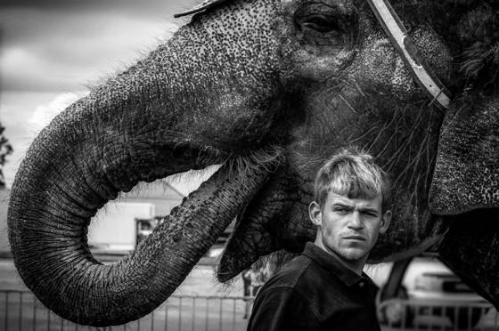 Elephant handler hammond