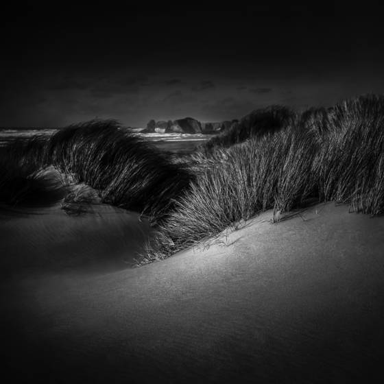 Sea grass 2