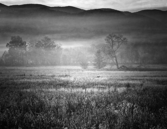 Cades cove foggy morning