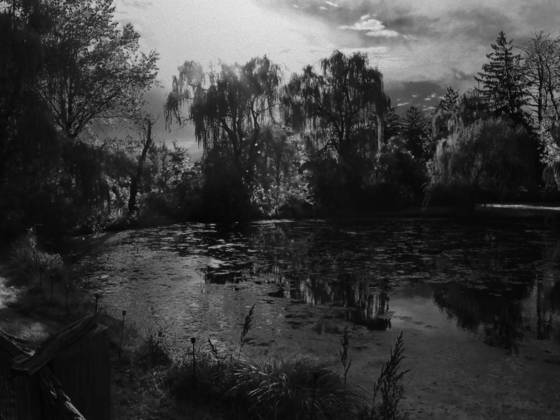The pond at the edge of time