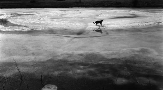 Cat on ice
