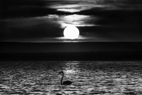 Carotene under the moon