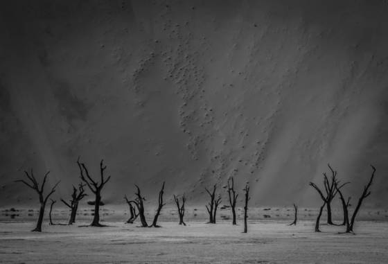 Namib dunes and trees
