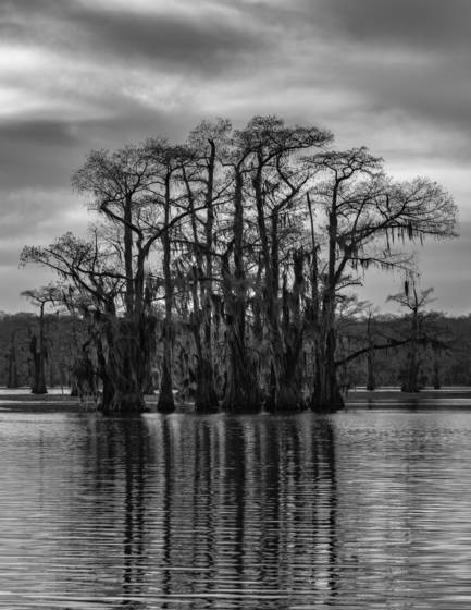 Cypress on caddo lake