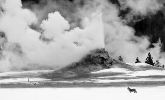 Wild eruption